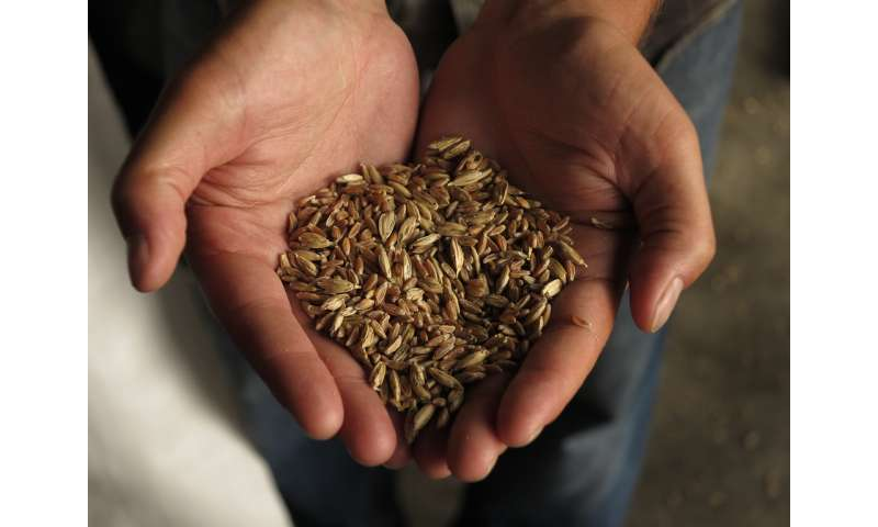 Heritage and ancient grain project feeds a growing demand