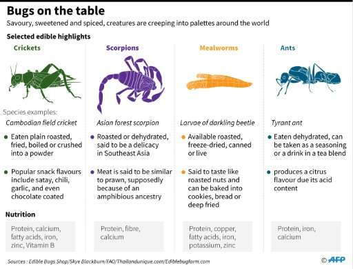 High in protein, cheap to produce, and with a much lighter carbon footprint than meat or dairy farming, bugs are already part of
