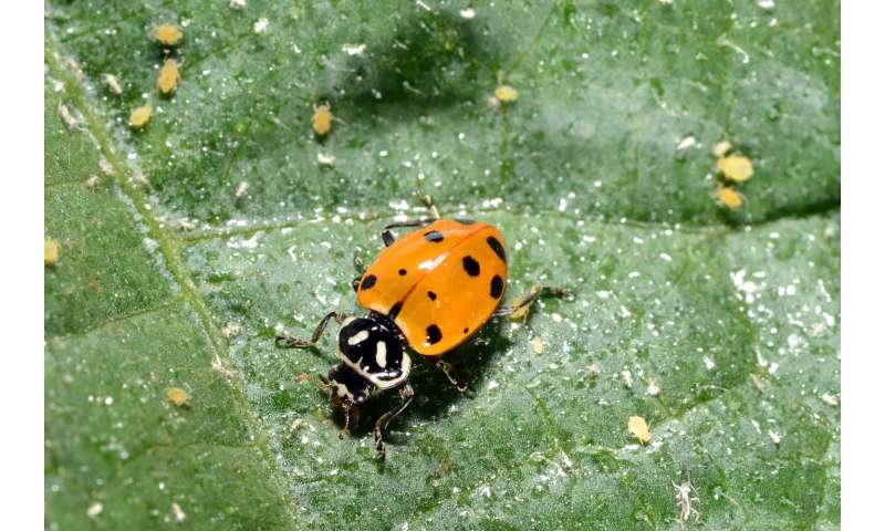 High tunnels boost yield, along with plant-damaging insects