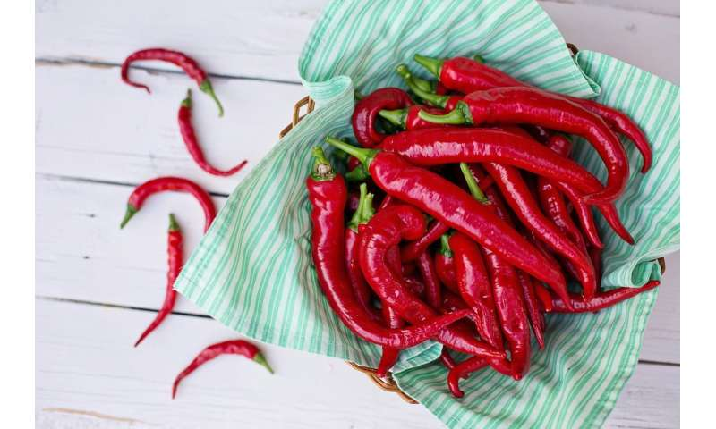 More Testing Less Play Study Finds >> Study Finds Association Between Eating Hot Peppers And Decreased