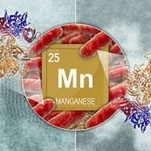 How bacteria produce manganese oxide nanoparticles