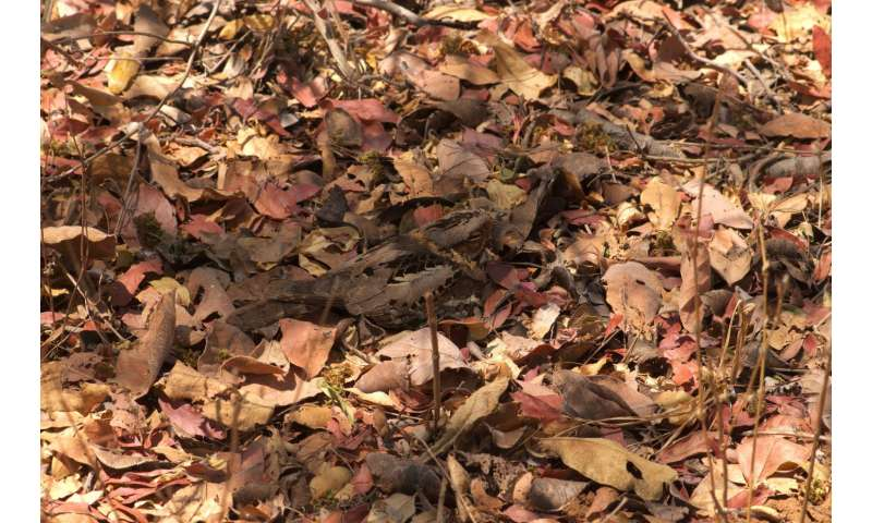 How camouflaged birds decide where to blend in