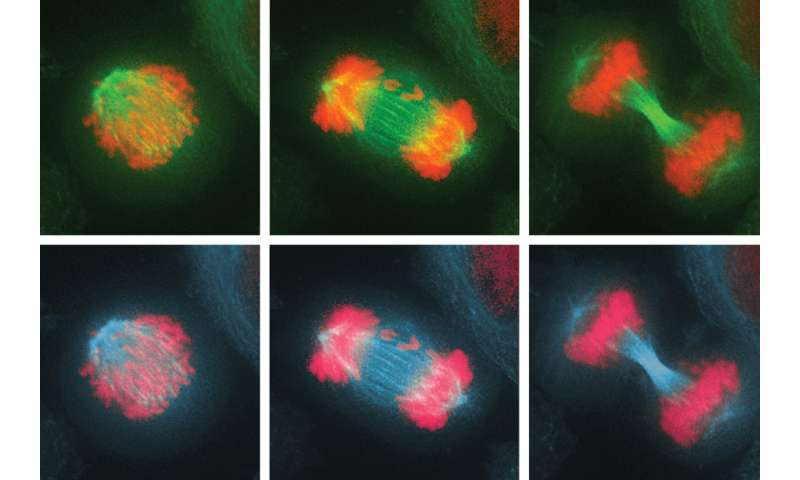 How cells combat chromosome imbalance