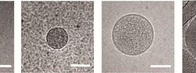 How malaria tricks the immune system