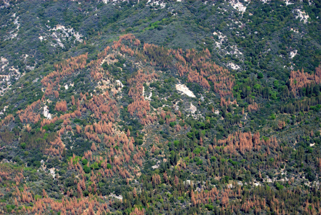 How much drought can a forest take?