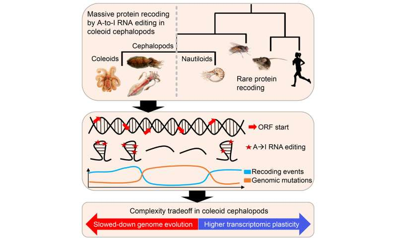 How octopuses, squid, and cuttlefish defy genetics' 'central dogma'