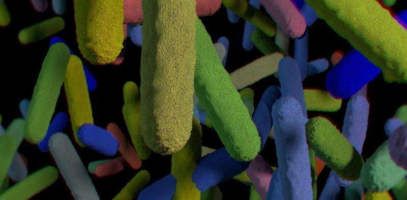 How our gut bacteria affect cancer risk and response to treatment