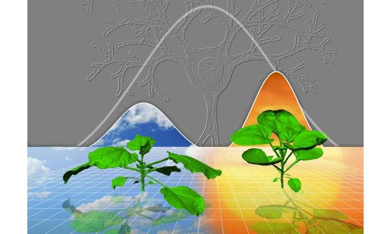How plants grow like human brains