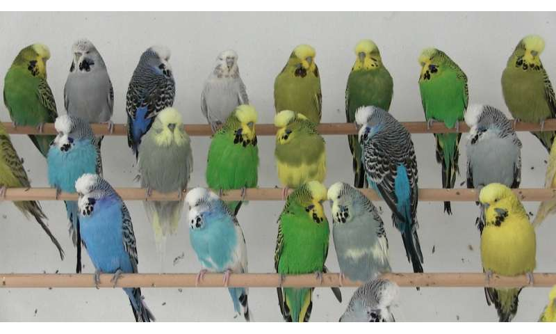 Green In yellow and blue green in parrots