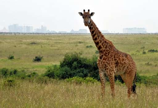 Human expansion and activity threatens more than 360 species of large mammals in Africa, Asia and South America