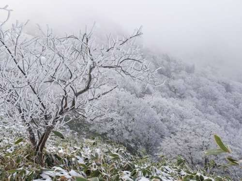 Human influences have reduced the likelihood of record-breaking cold event in China