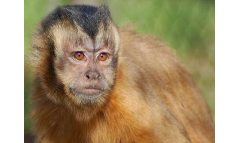 Humans, unlike monkeys, turn competitive situation into cooperative one