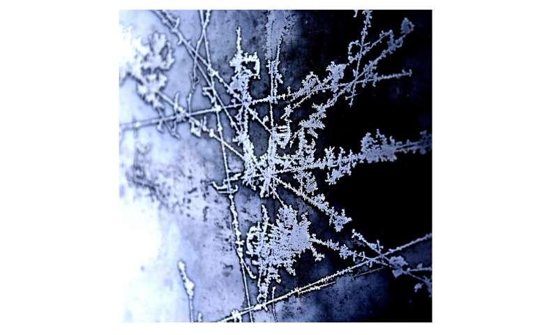 [Image: ice.jpg]