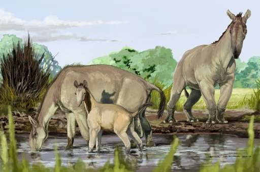 Image received from the American Museum of Natural History shows an artist's impression of Macrauchenia patachonica, the creatur