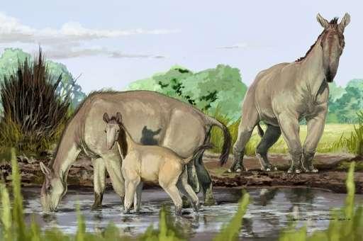L'image reçue du Musée américain d'histoire naturelle montre l'impression d'un artiste de Macrauchenia patachonica, la créatur