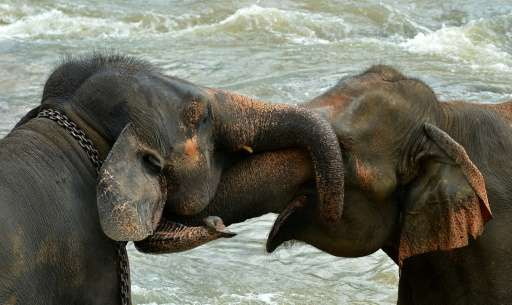 Individuals would have to pay 10 million rupees ($66,000)for an elephant, while temples would get them for free.