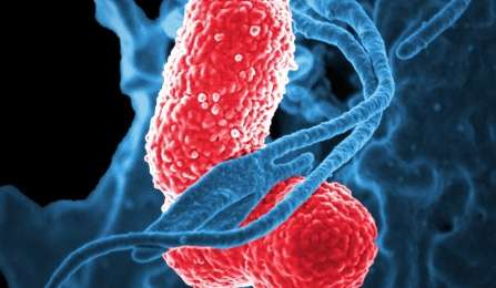 Ineffective antibiotics form strong teams against deadly super bacteria