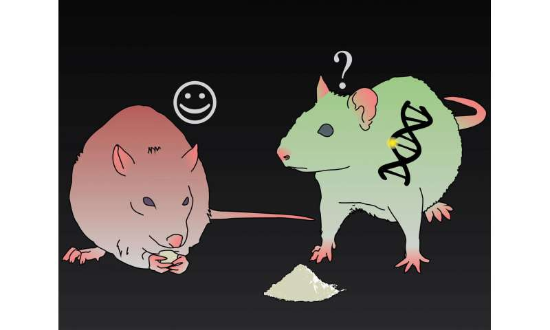 In rats that can't control glutamate, cocaine is less rewarding, staving off relapse