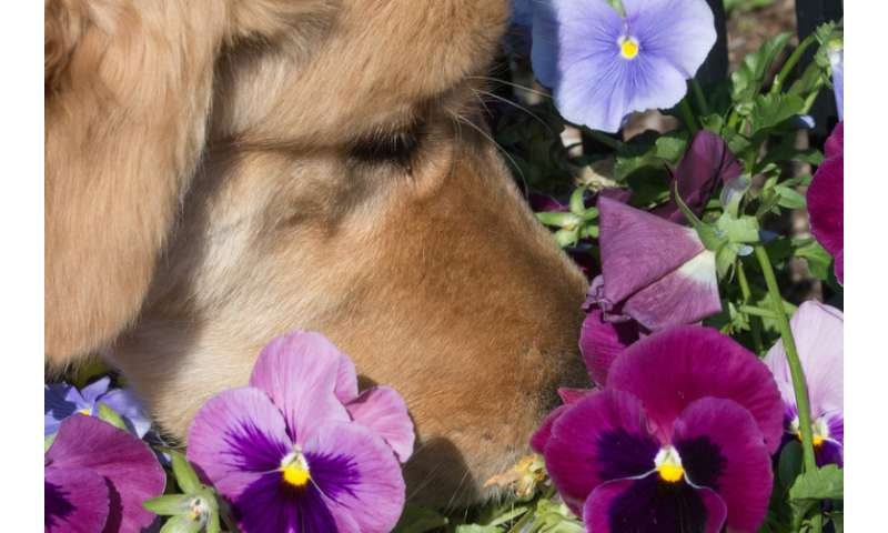 It's a myth that humans' sense of smell is inferior to that of other animals – here's why
