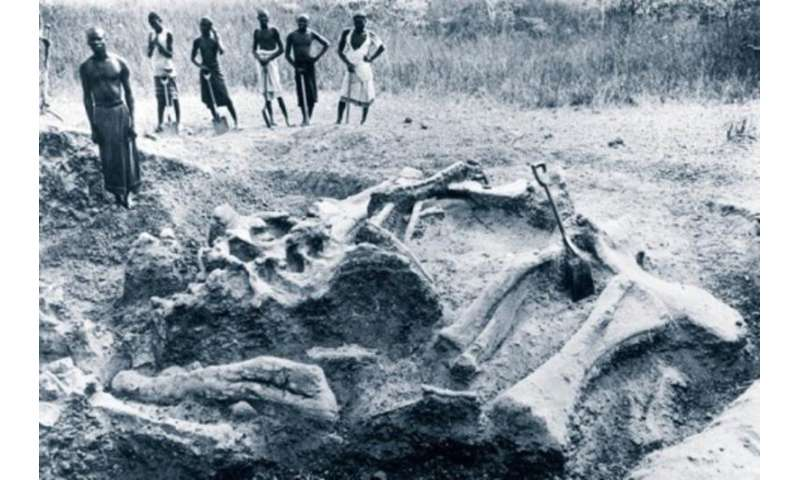 It's time to celebrate Africa's forgotten fossil hunters