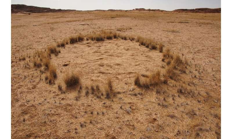 IUPUI researcher weighs in on fairy circles of Namibia