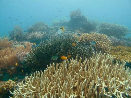 Japan's Fisheries Agency  will use an underwater camera to check the condition of coral off the southern island of Kyushu, inclu
