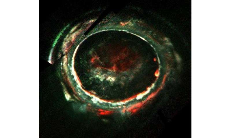 Jupiter's Aurora Presents a Powerful Mystery