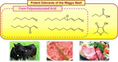 Key odorants in world's most expensive beef could help explain its allure