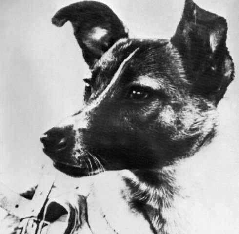 Laika, a former street dog, made history by blasting off in to space on a one-way journey as the first living creature to go int