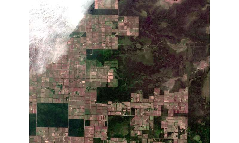 Larger swaths of tropical forest being lost to commercial agriculture