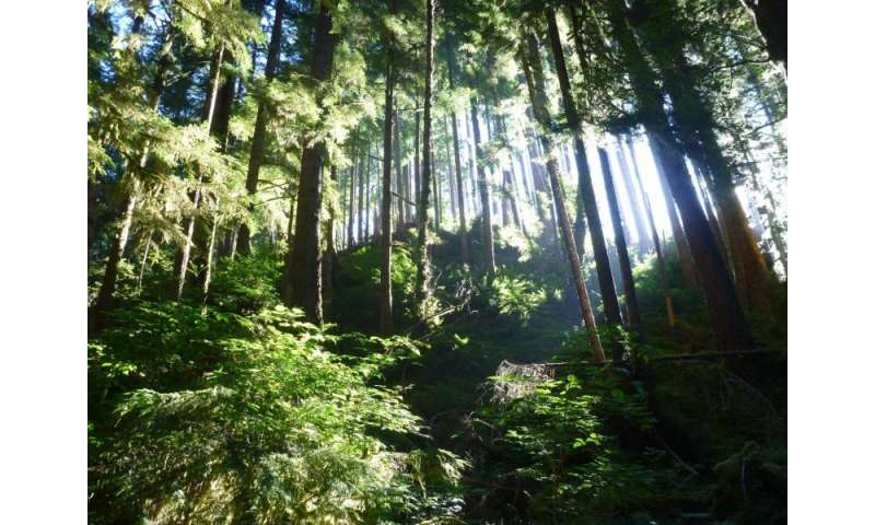 Large-scale experiment on the rural Olympic Peninsula to test innovations in forest management