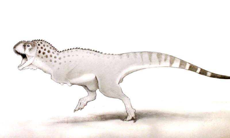 'Last African dinosaur' discovered in Moroccan mine