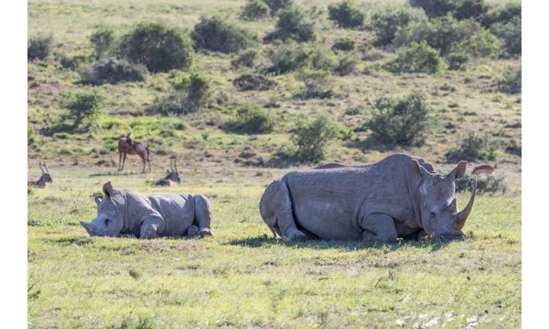 Legalising rhino horn trade—don't charge in blind