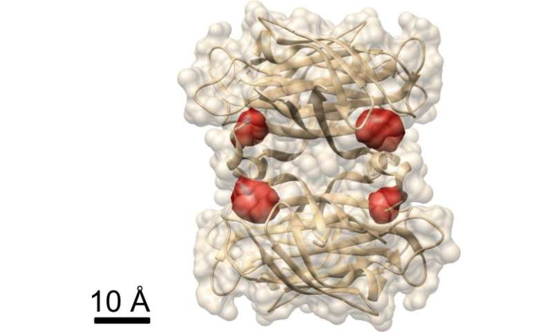 Light microscopy provides a deep look into protein structure