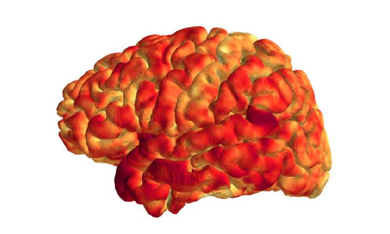 Link discovered between immune system, brain structure and memory