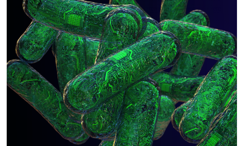 Living computers: RNA circuits transform cells into nanodevices