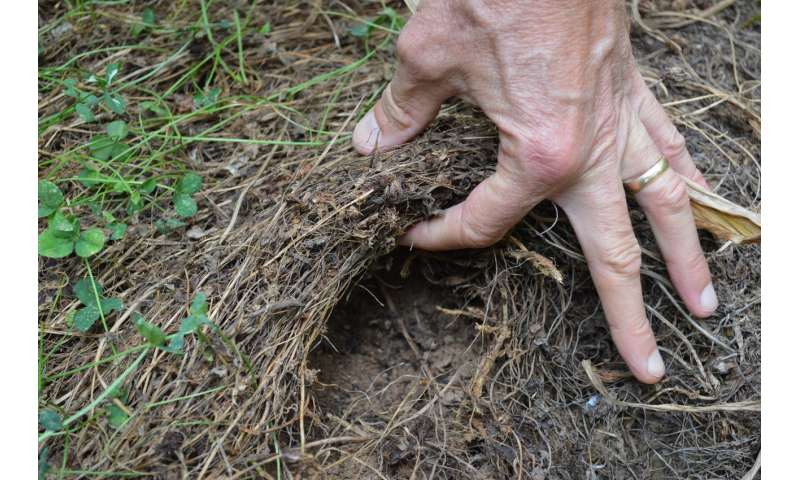 Living mulch builds profits, soil