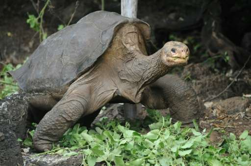 Lonesome George was thought to be around a century old when he died in June 2012