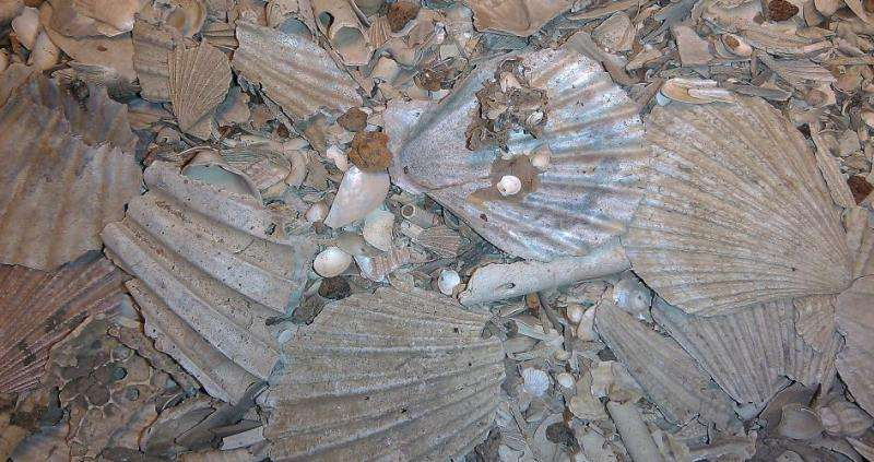 Lost ecosystem found buried in mud of southern California coastal waters