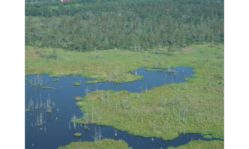 Louisiana wetlands struggling with sea-level rise 4 times the global average