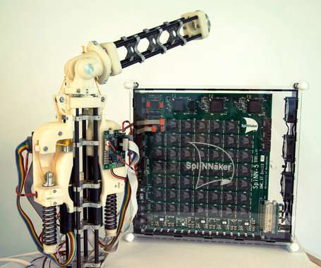 Low cost robot to study the brain