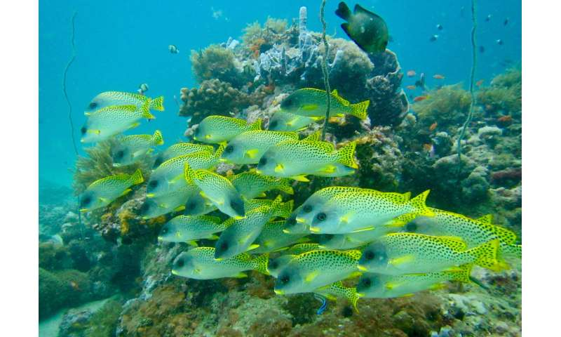 Maintaining fish biomass the key to conserving reef fish biodiversity