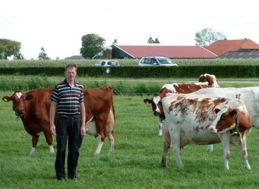 Many Dutch farmers, such as dairy producer Gerard Hartveld, who have no family to step into their boots when they retire, face t