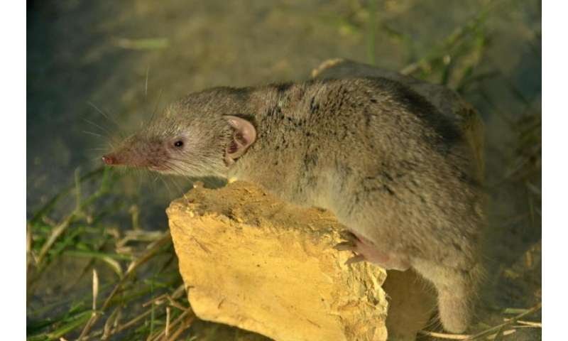 Mapping the migration of house shrews
