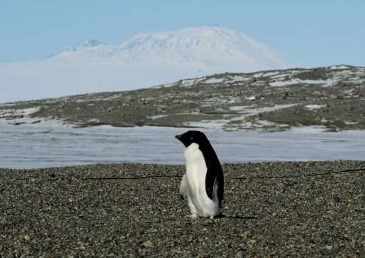 Mass starvation has wiped out thousands of Adelie penguin chicks in Antarctica, as unusually thick sea ice forced their parents