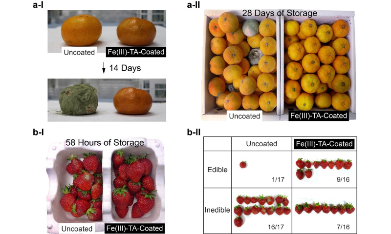 Material-independent nanocoating antimicrobial spray extends the shelf life of produce