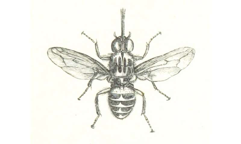 Medical screening and fly control could rapidly reduce sleeping sickness in key locations