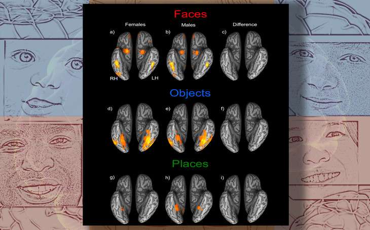 Men and women show equal ability at recognizing faces