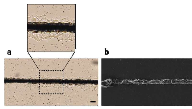 Metal-silicone microstructures could enable new flexible optical and electrical devices