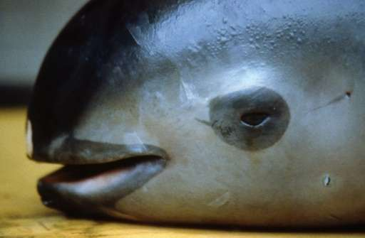 Mexico's vaquita marina population has declined from 200 in 2012 to 30